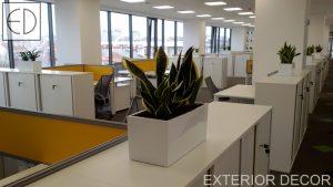 Интериорно-озеленяване-на-офис