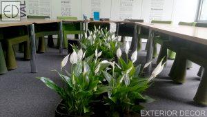 Конферентна зала с растения
