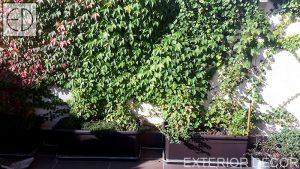 terasa-s-zelena-stena-i-bilki