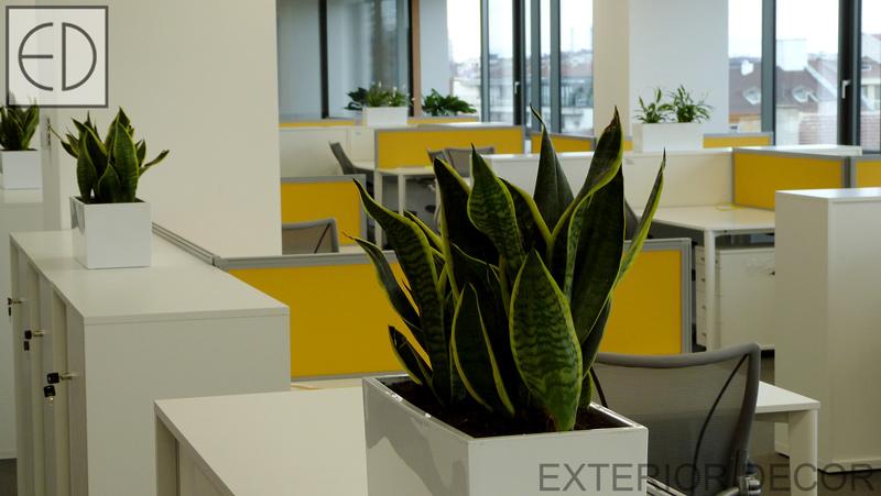 Офис-озеленяване