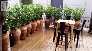 Озеленяване на ресторант