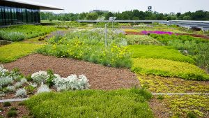 Chicago-Botanic-Garden-Green-Roof
