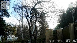 Есенна резитба на ябълково дърво