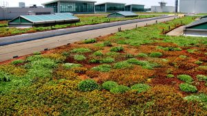 The Ford River Rouge Plant greenroof