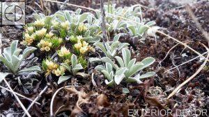Алпийска растителност