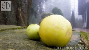 Ябълка от градината