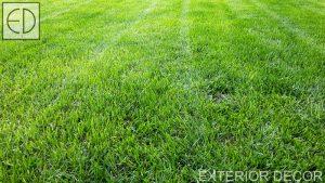 Млада тревна площ