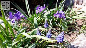 Ниски алпийски цветя
