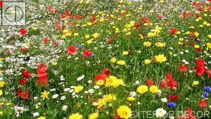 Поляна с полски цветя