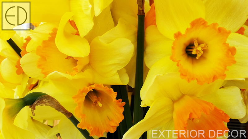 свежи-пролетни-цветя